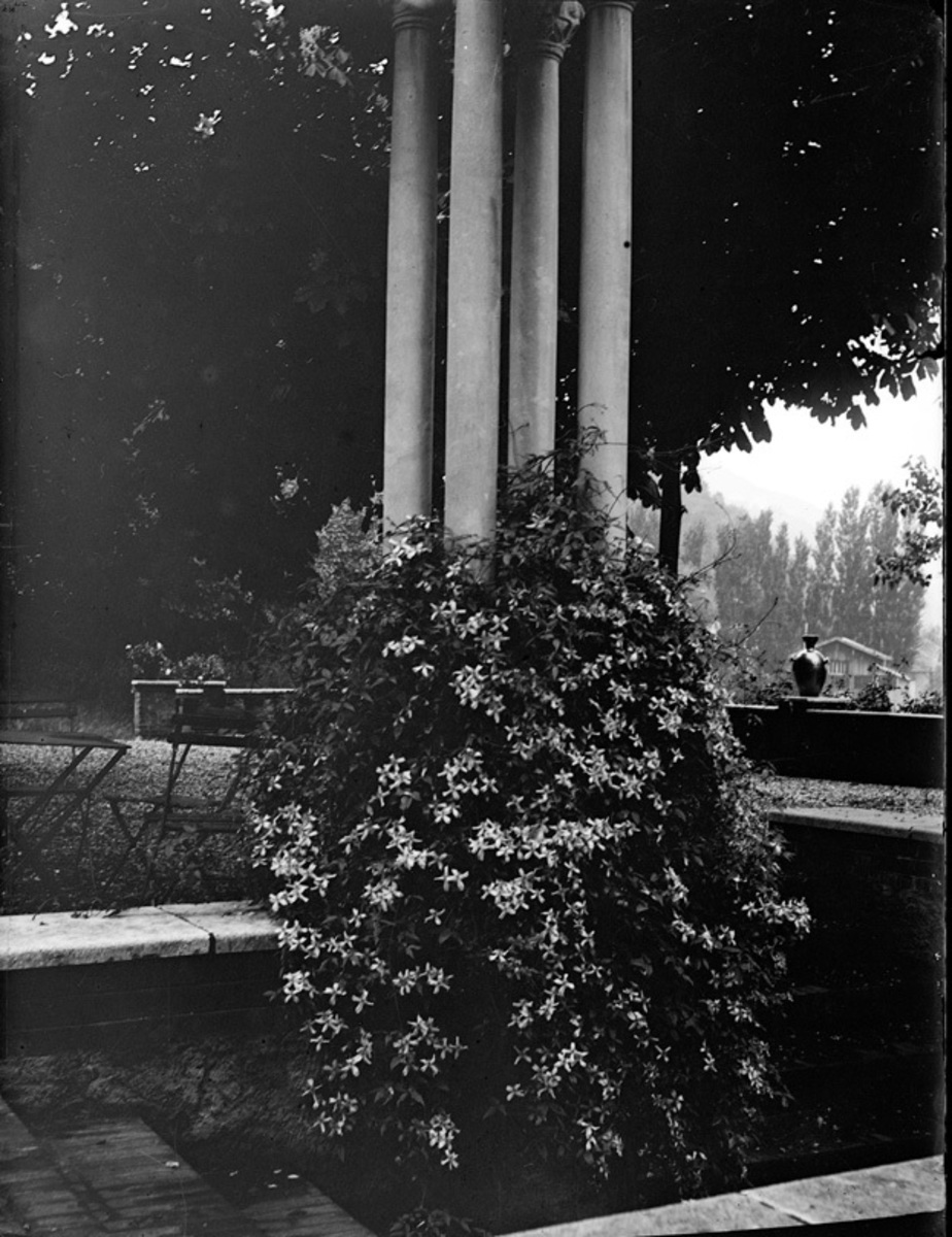 Clématite et colonne dans la cour Photographie