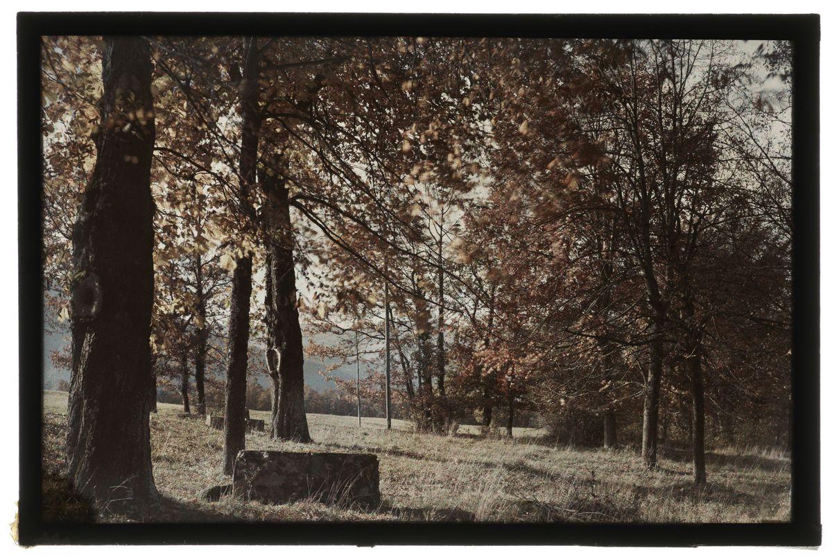 Sinard : le puits de mousse Photographie 9 novembre 1926, 1926/11